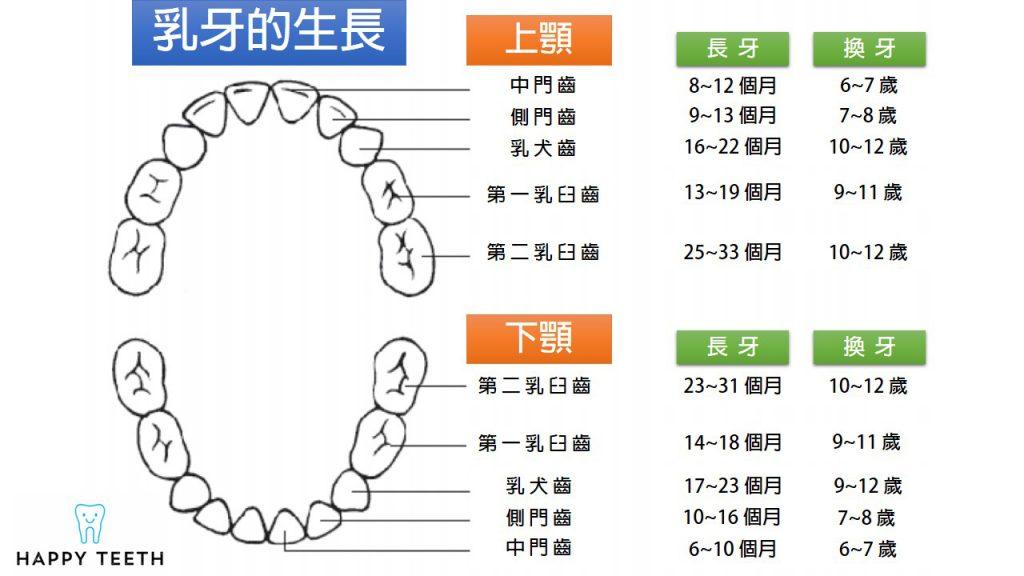 牙齒換牙時間