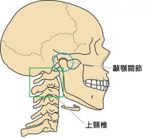顳顎關節位置